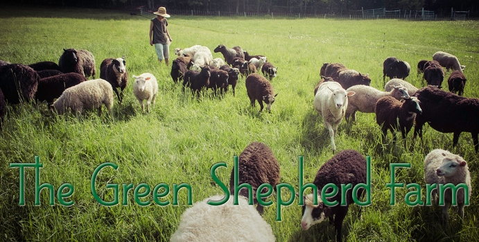 Annette walks with the flock to fresh pasture.