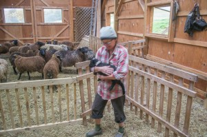 Annette holds one of the September lambs