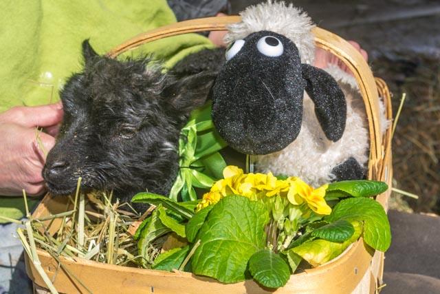 Easter Lamb 1